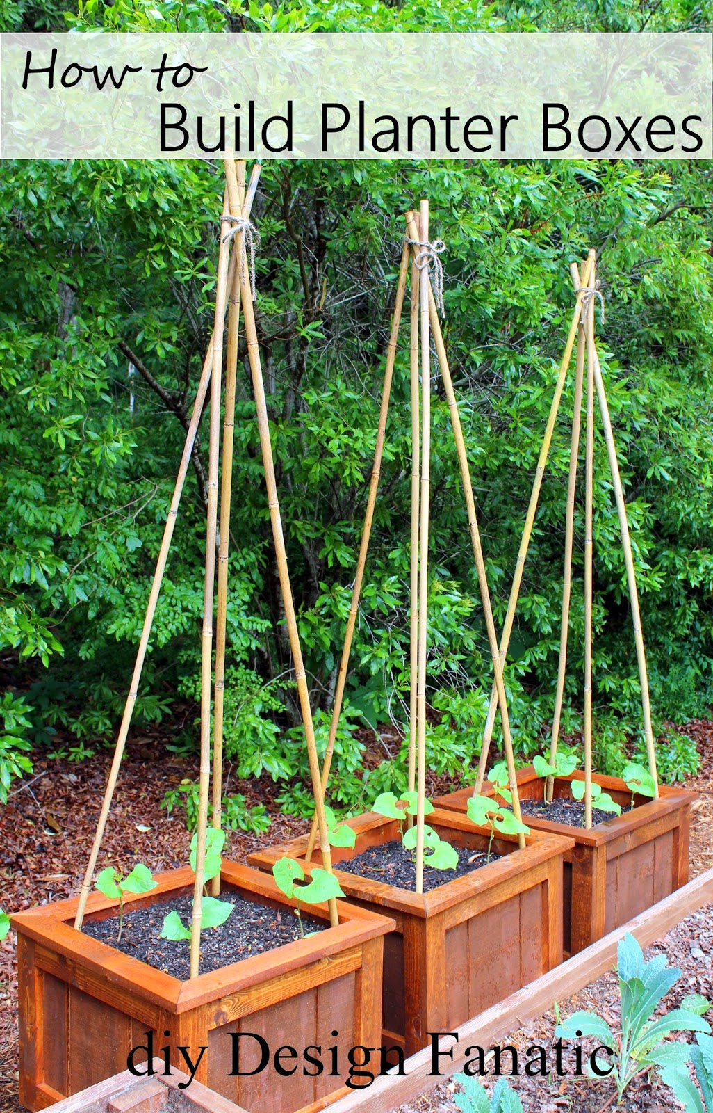 Diy design fanatic diy projects of 2013 for Indoor gardening green beans