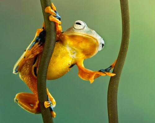 10-Wil-Mijer-Frog-Macro-Photography-www-designstack-co