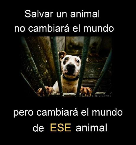 Salvá un animal...
