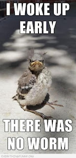 Funny Bird Gifs