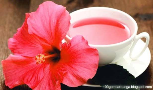 Gambar Manfaat teh Bunga Sepatu, Fungsi, Kandungan, dan Khasiatnya
