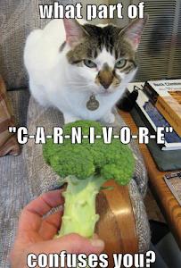 carnivore cat