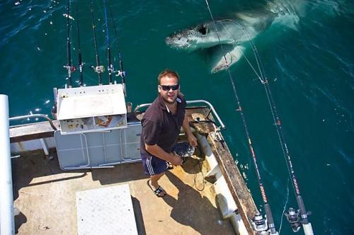 tubarão incrívewl lol humor fotos melhores imagens da semana eu adoro morar na internet