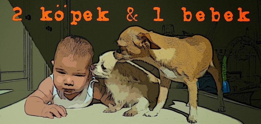 2 Köpek & 1 Bebek