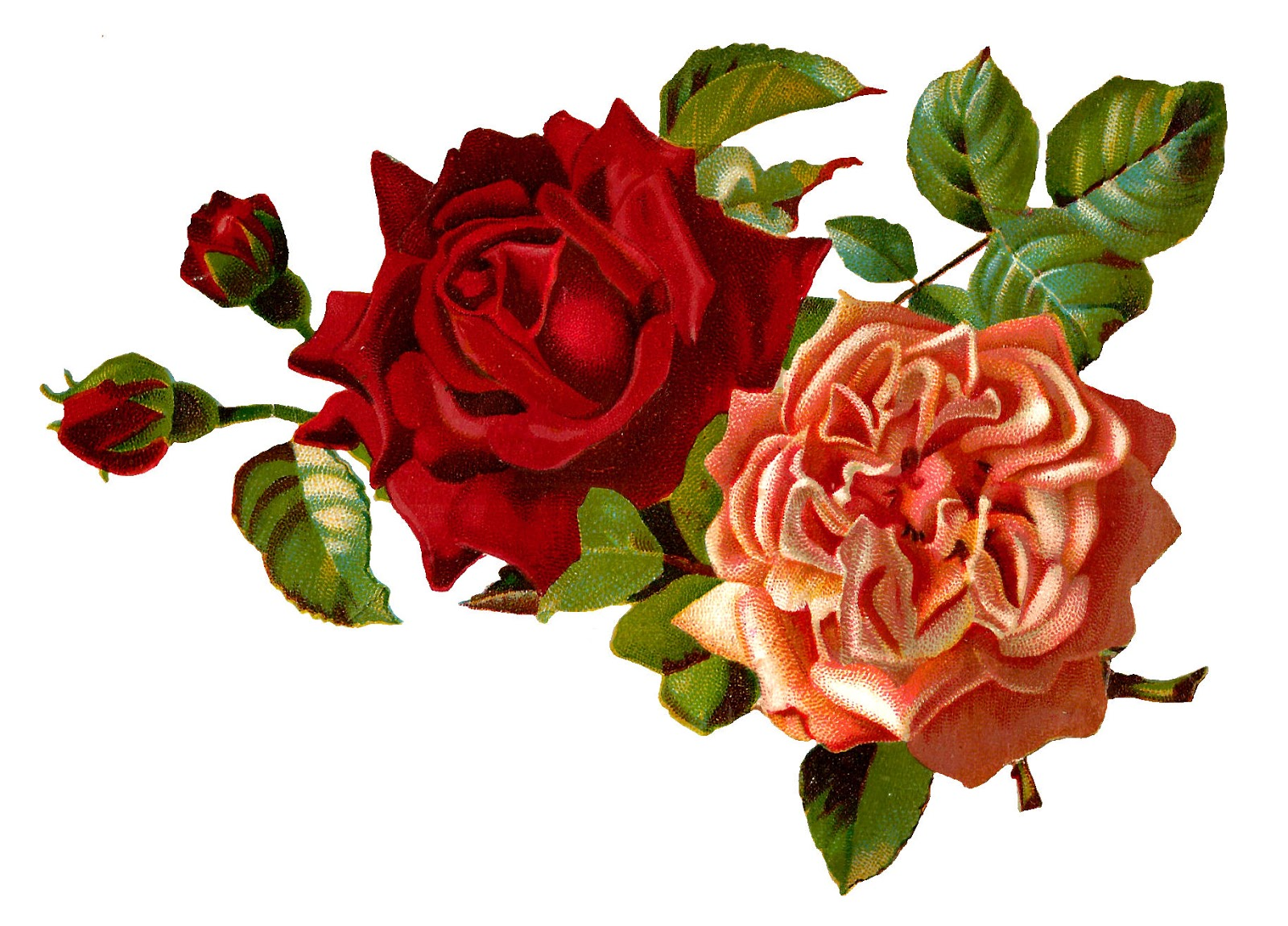 single flower in vase painting with Stock Rose Flowers Digital Images on Recycling Awareness Posters C aign moreover Flower preservation furthermore Pink Large Rose and  Rose Bud   Clipart in addition Diy Garden Pots Decoration Ideas moreover 5962615kd26da7b4.