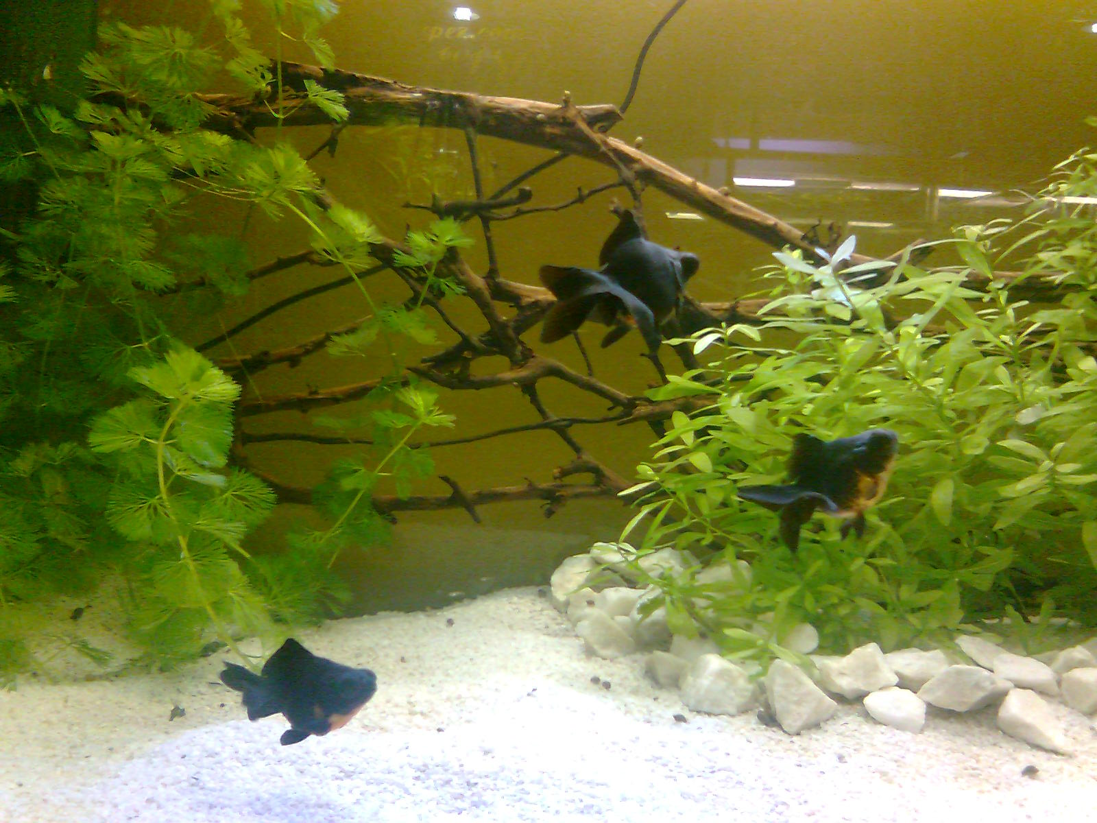 Acuarios decorpez dise os de acuarios for Disenos de acuarios