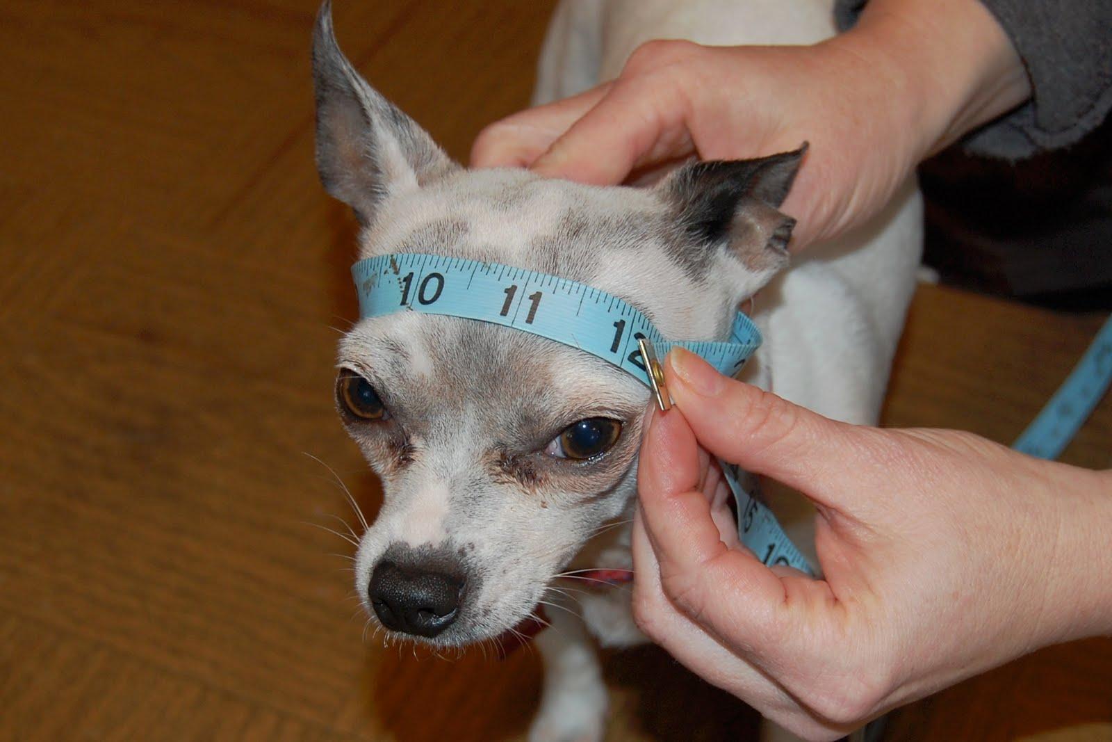 Posh Pooch Designs Dog Clothes: Visor For Dogs Crochet Pattern