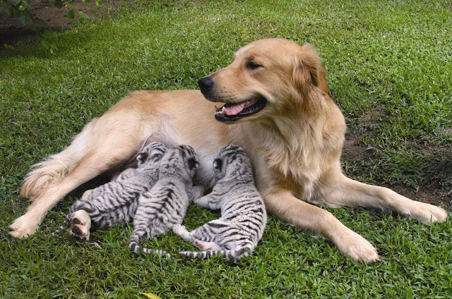 Cachorritos con su Mamá