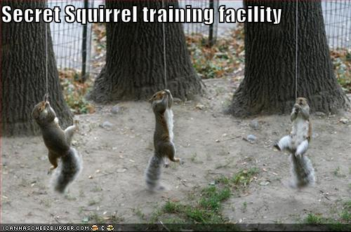 Funny squirrel pictures with captions, funny squirrel images with