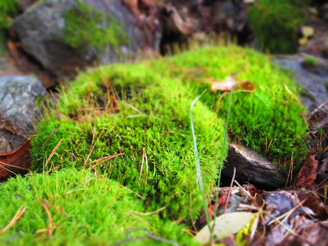 Steine mit Moos bewachsen
