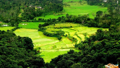Best Honeymoon Destinations In India - Coorg