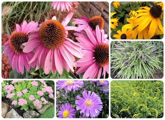 A Guide To Northeastern Gardening September 2013