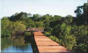 hutan_mangrove
