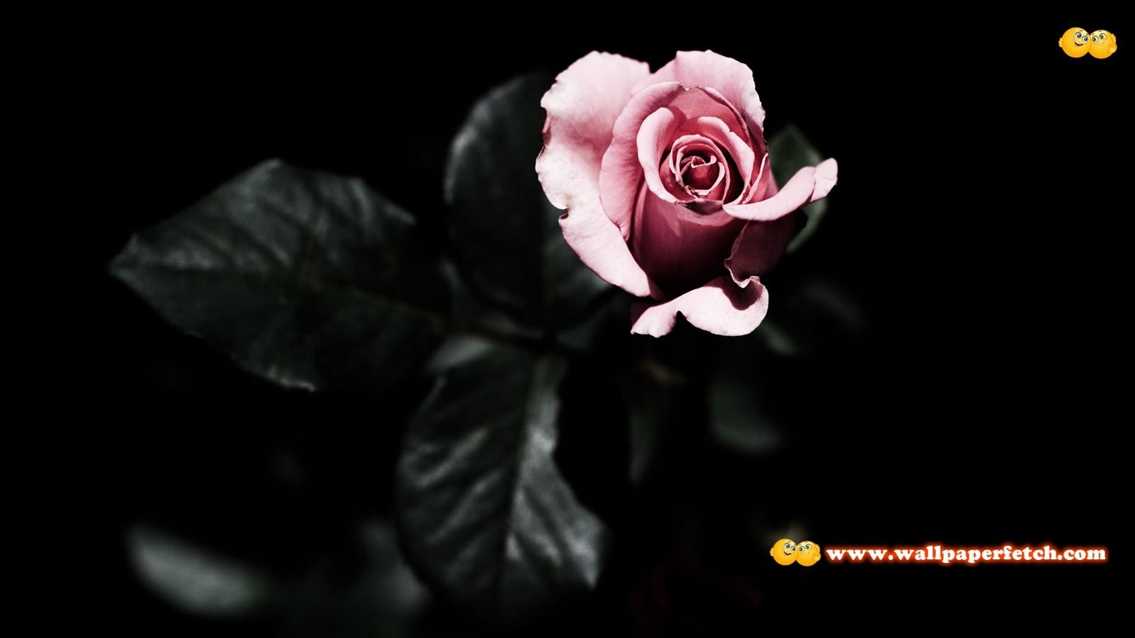 http://2.bp.blogspot.com/-C8aWG3st2Nw/TvTHdxYcvPI/AAAAAAAADIs/FEpDXSydrOw/s1600/HDPackSuperiorWallpapers296_038.jpg