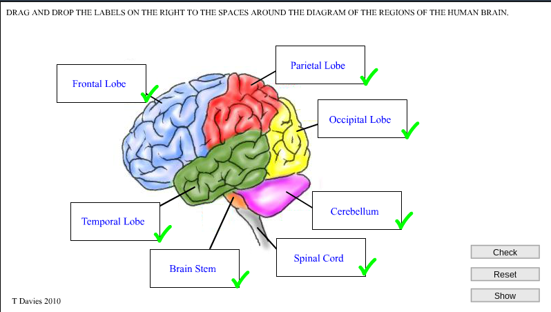Brain diagram with labels out auto wiring diagram today jayden elm park school find the parts of the brain activity rh jayden57238 blogspot com human brain diagram and functions brain diagram worksheet ccuart Gallery
