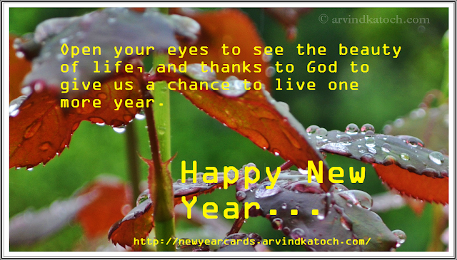Rian drops, Rose plants, Rose leaves, Happy new year, New year card, HD card,