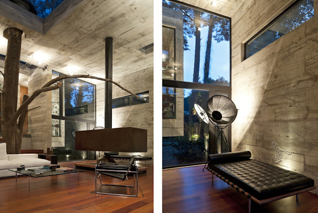Pictures of modern furniture by the tree passing through the interiors