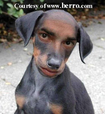 Funny dogs most funny photos images 2012