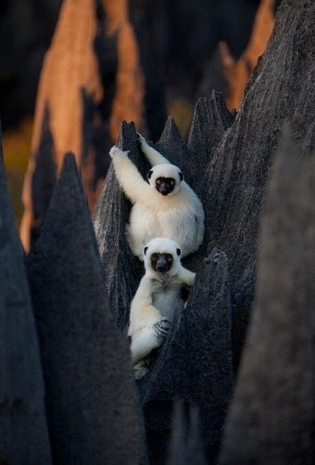 Madagaskar Kamena-suma-madagaskar-3