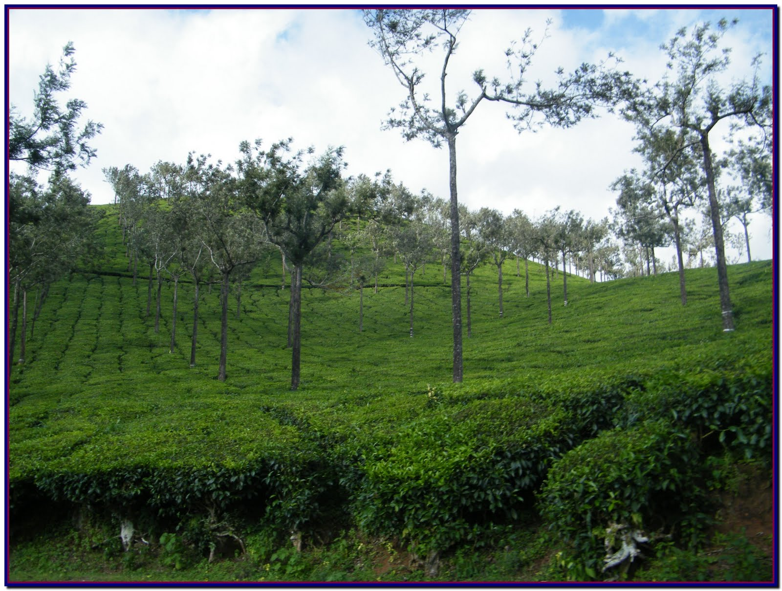 A Travel To God S Own State Kerala India Munnar Green