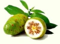 Mengkudu Bancudus latifolia