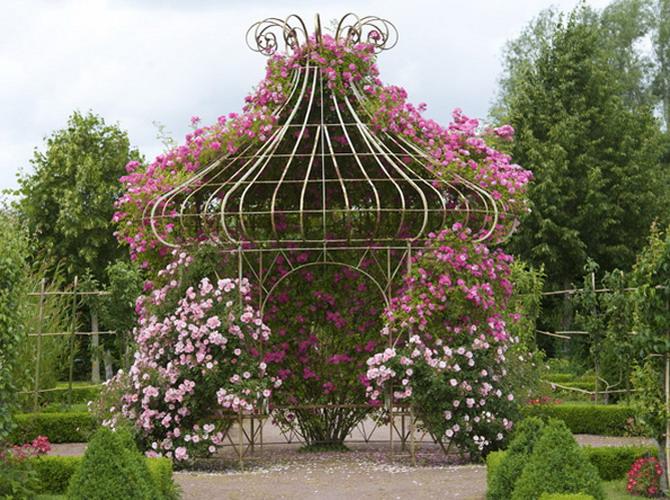 flores de jardim rosas : flores de jardim rosas:Depósito Santa Mariah: Jardim De Rosas, Faça Um!