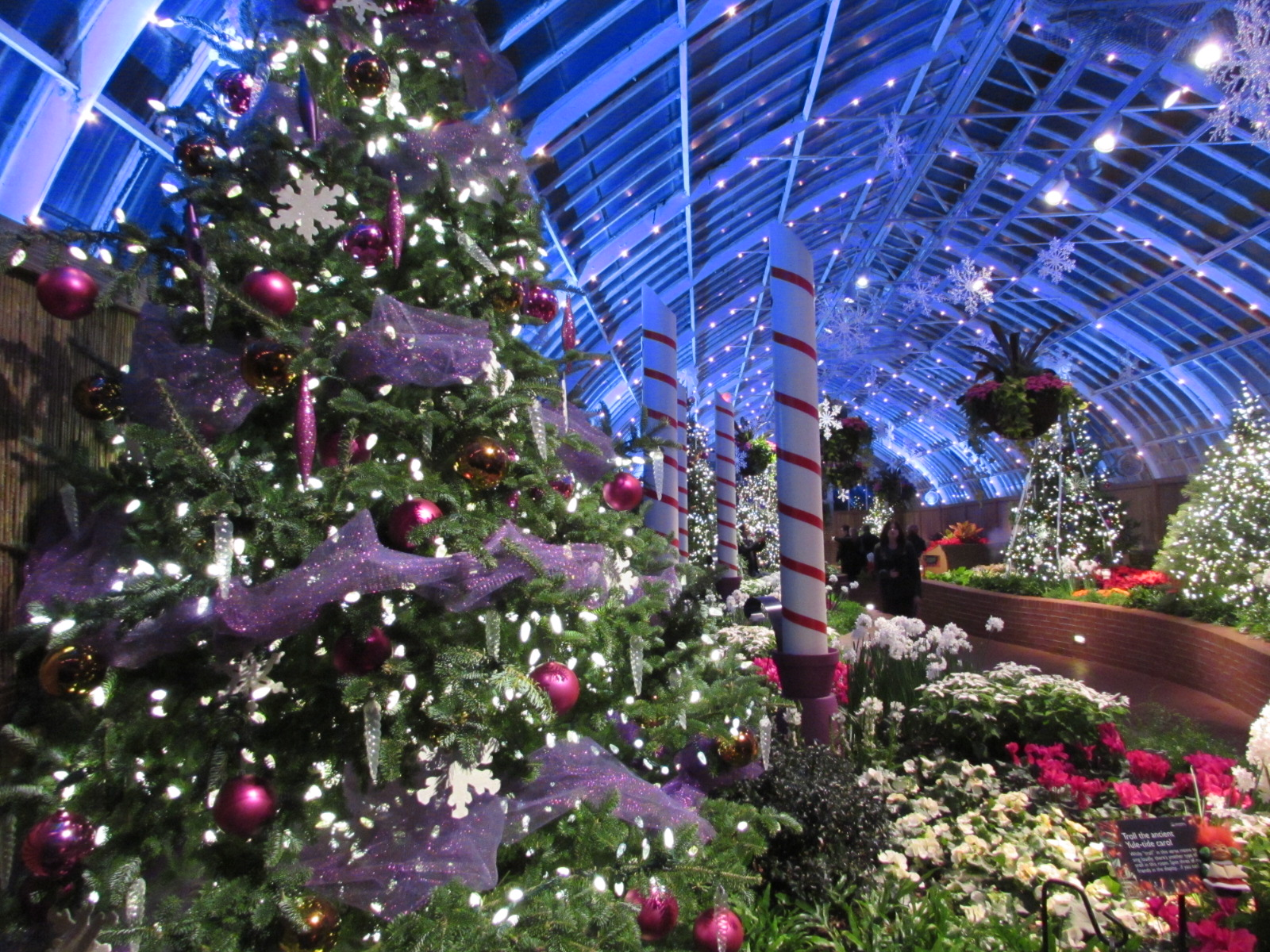Phipps conservatory winter flower show pittsburgh pa interesting the phipps conservatory winter flower show and light garden runs until january 10th we highly recommend visiting this world class attraction mightylinksfo