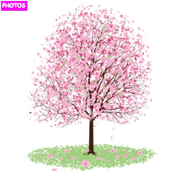 How To Draw A Cherry Blossom Tree In Pencil Cherry blossom tree drawing