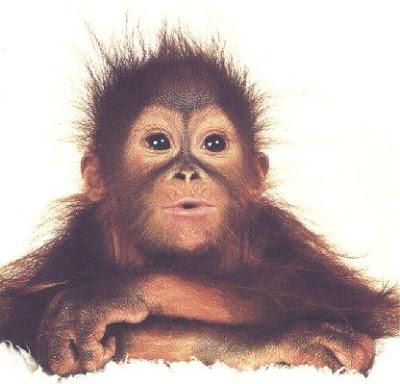 http://2.bp.blogspot.com/-CBGfNKMPbiI/TpfJNmsip0I/AAAAAAAAFjk/-L55g2iDXeQ/s400/korz_1127170375_monkey.jpg