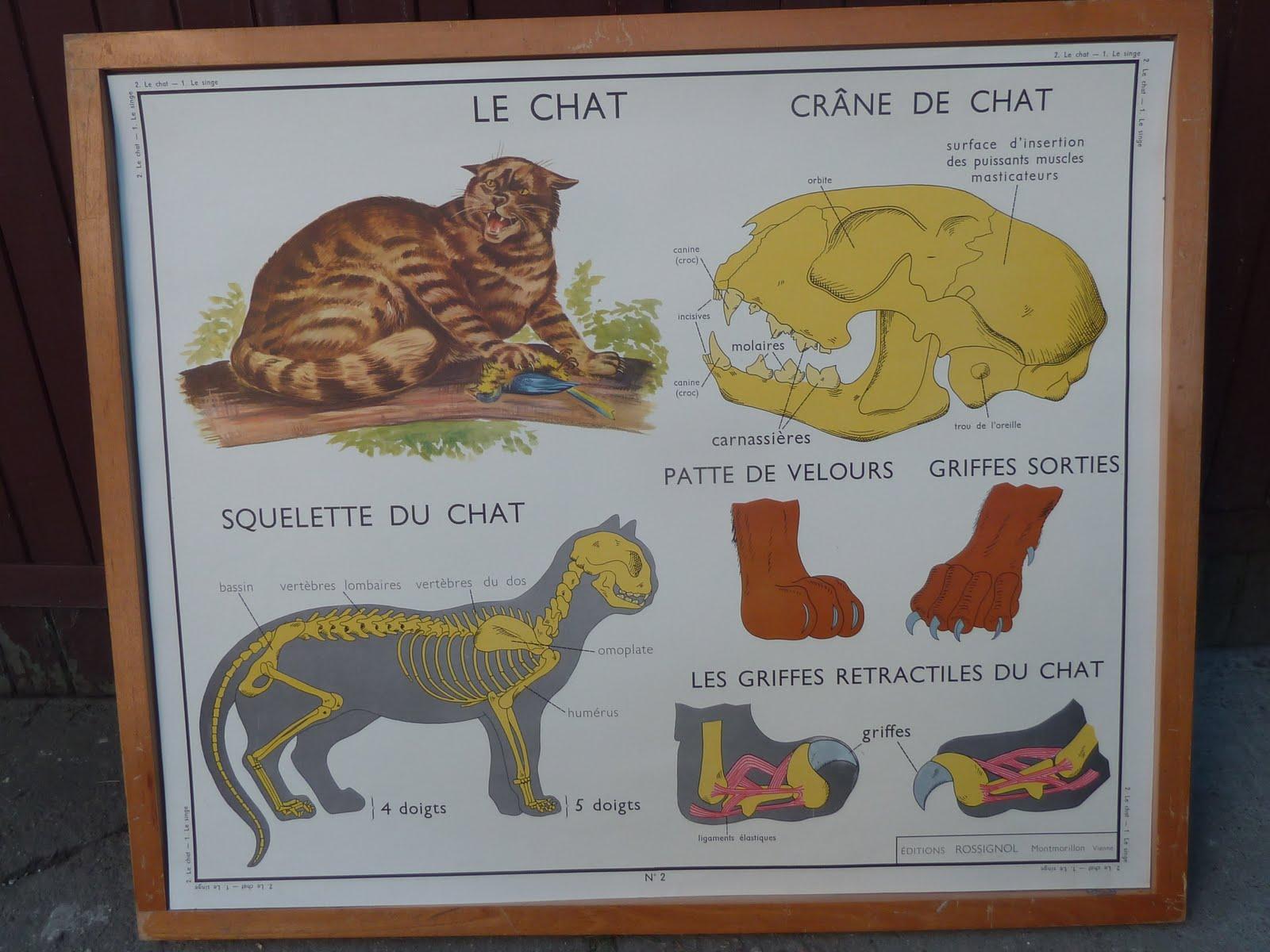 ecole fmr 1000 affiches scolaires le chat et le singe ancienne affiche scolaire les animaux 960. Black Bedroom Furniture Sets. Home Design Ideas