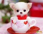 cute dog names . cute dogs . cute dog names for girls . cute dog pictures . cute dog