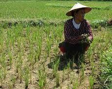 Ekonomi Nasional Via Pemberdayaan Desa