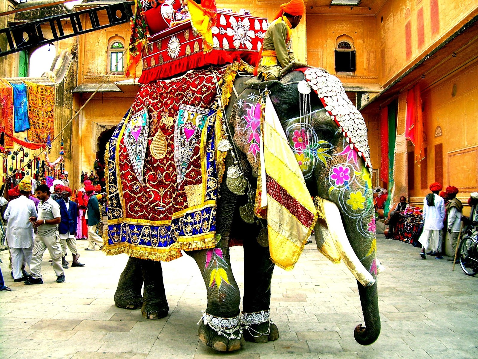 elephant-06