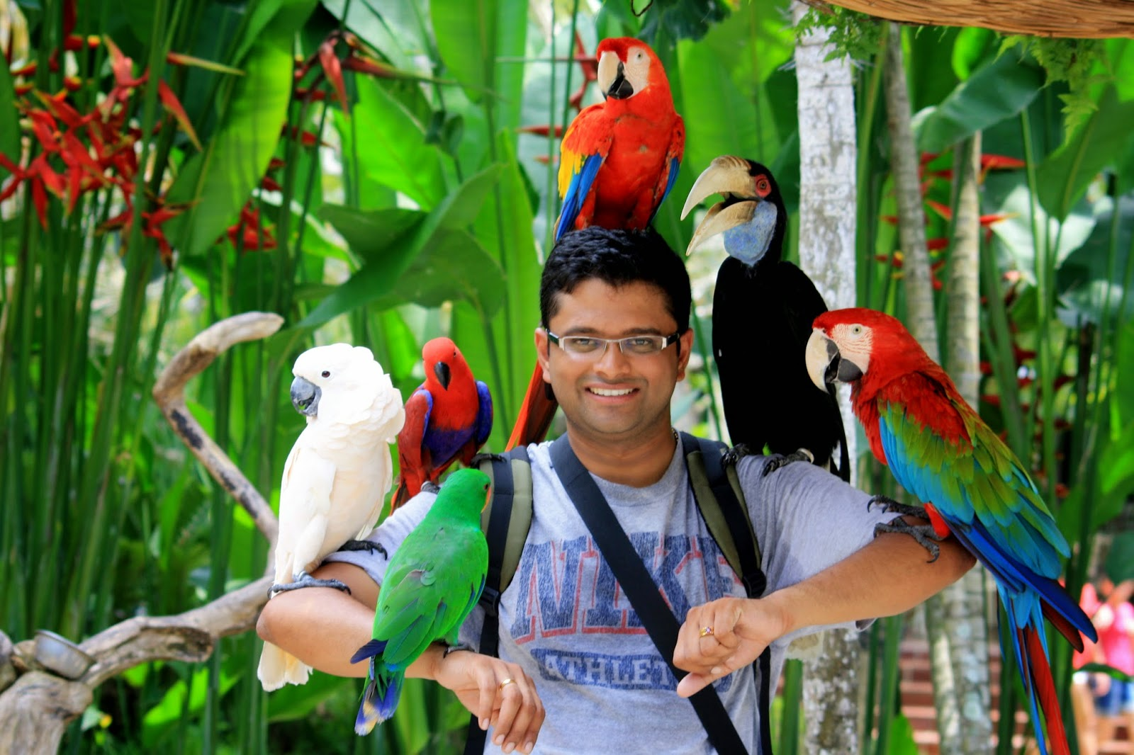 Lokasi Alamat Bali Bird Park Ubud Ticket Price