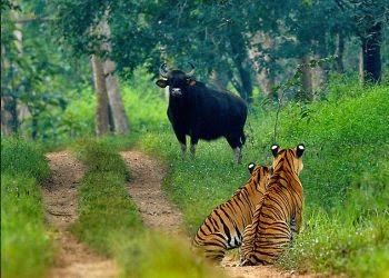 Nagarjunsagar-Srisailam Tiger Reserve