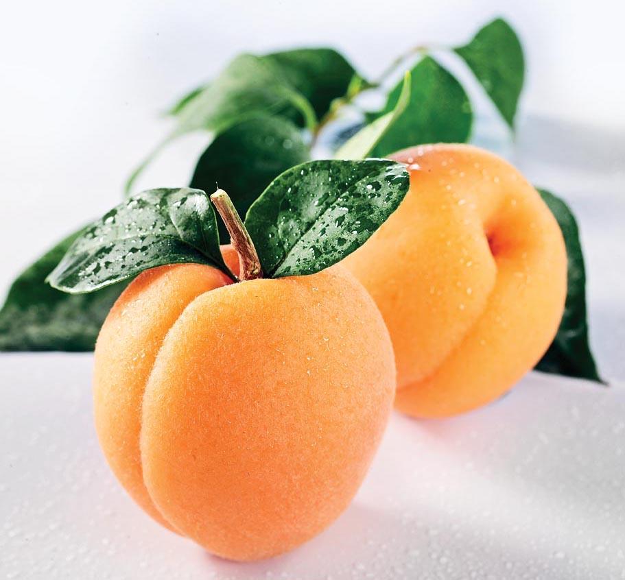 Apricot Pictures (Part 2)