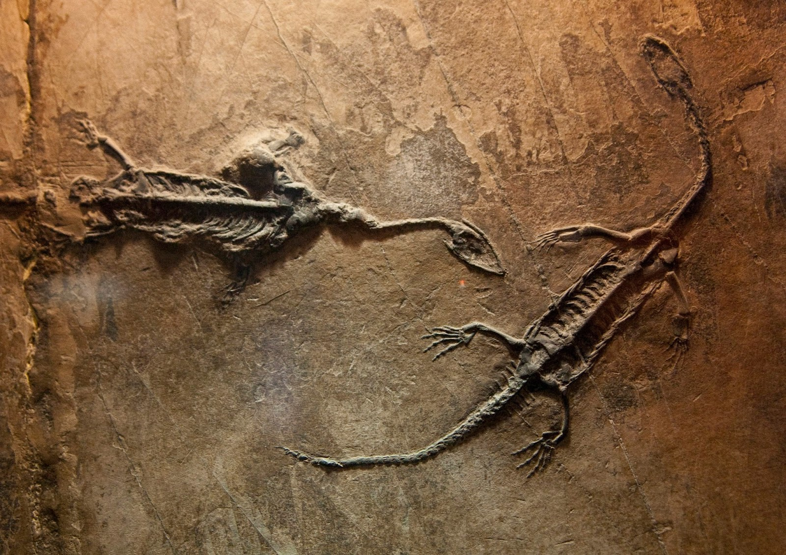 decoding fossils of dinosaurs Free online library: just for frills decoding dinosaurs' cryptic anatomical features by science news science and technology, general animal anatomy research.