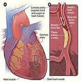 peredaran darah besar dan darah kecil