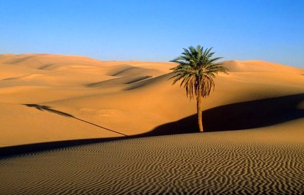 كتاب أهم مشاكل التربة الصحراوية وطرق التغلب عليها