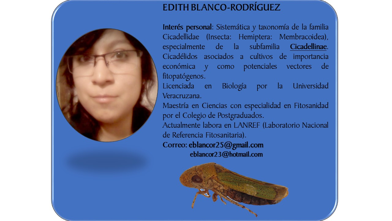 Cicadellidae from Mexico: 2015