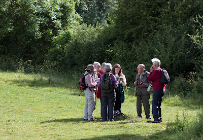 Some of the Orpington Field Club oblivious to all around them.  Next to Well Wood,  11 June 2011.