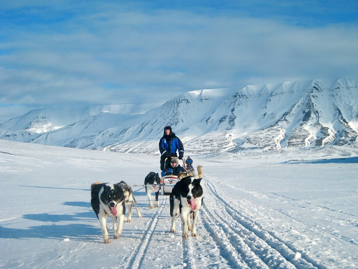 dog sledding in northern norway