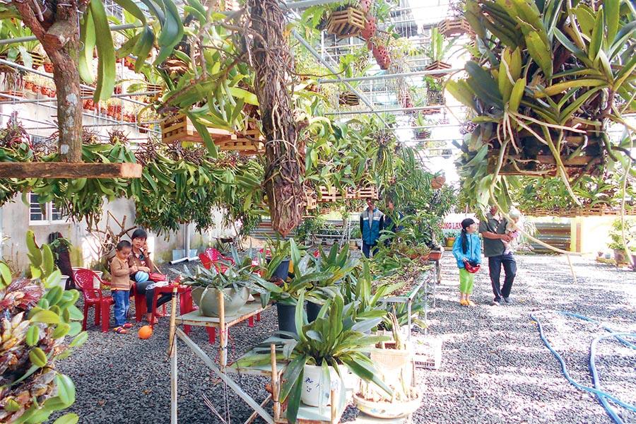 Gia Lai: Cà phê với lan rừng Phố núi