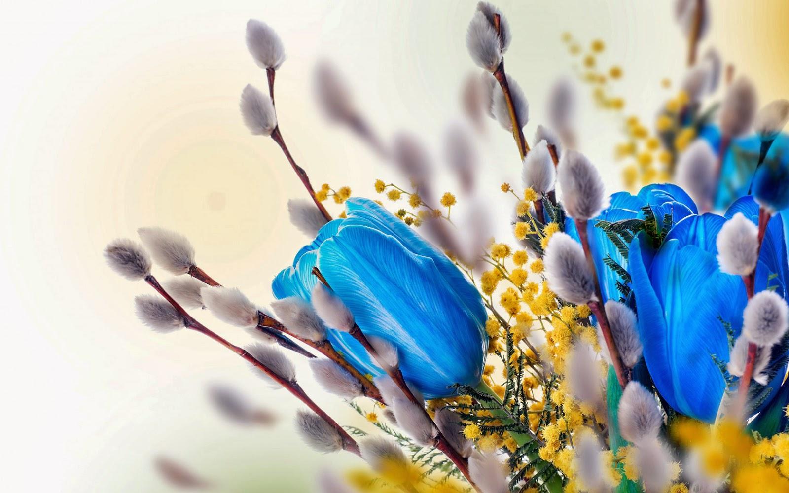 Wilgentakken met katjes en blauwe tulpen