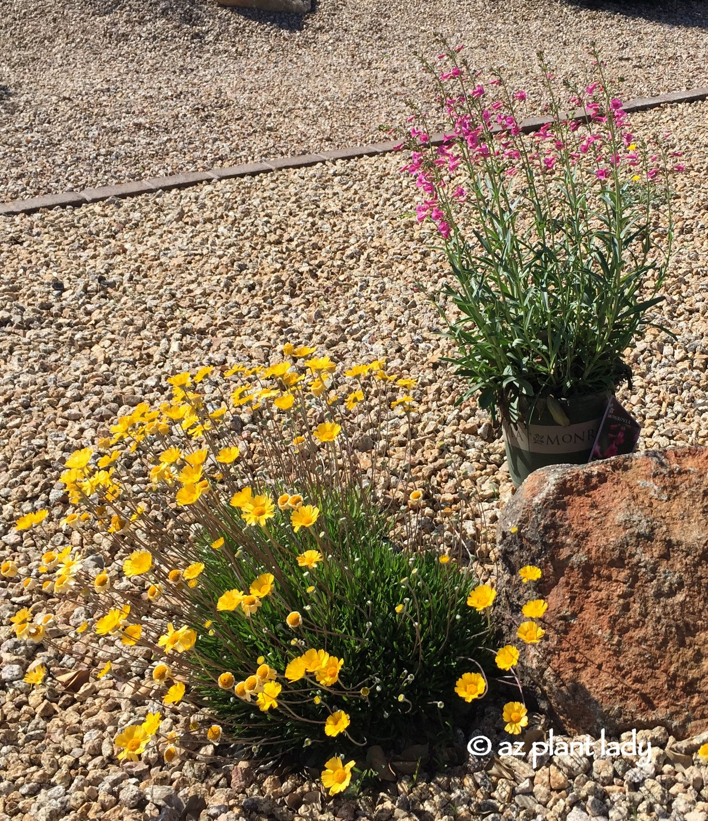 What Plant Where Beautiful Plant Combinations Ramblings From A