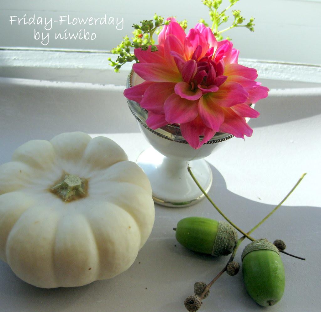 niwibo life is so beautiful friday flowerday und ein k rbistausch. Black Bedroom Furniture Sets. Home Design Ideas