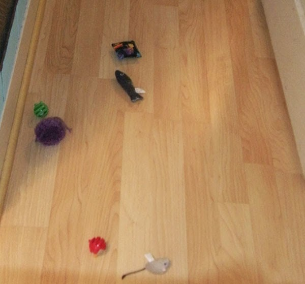 kollima.gr - 8 συνηθισμένα αντικείμενα: Πως τα βλέπουν ένας άνθρωπος και μιας γάτα!