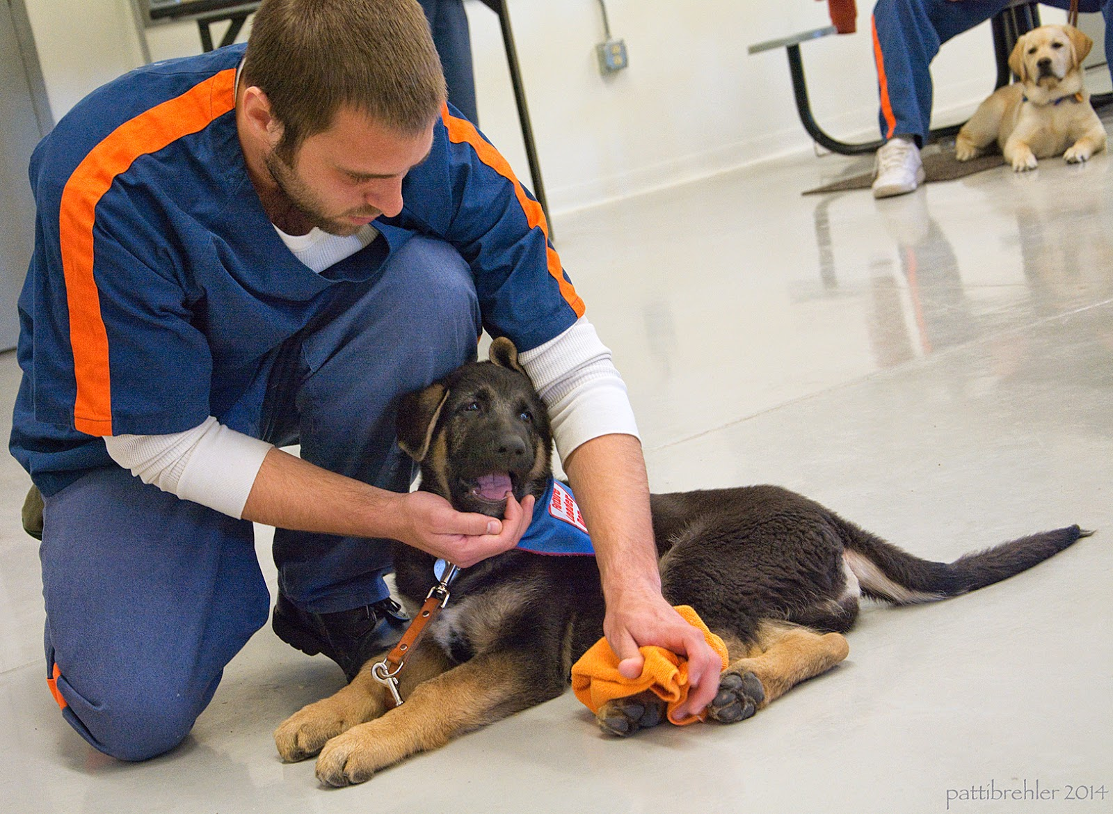 A man is half-kneeling on the painted concrete floor on the left side of the photo. He is wearing the prison unform and is looking down at a small german shepherd puppy lying on the floor in front of him and to the right. The man's left hand is wiping the left rear paw of the puppy with an orange rag. The man's right hand is holding the lower jaw of the puppy, whose mouth is open. The puppy is wearing the blue Future Leader Dog bandana. There is a yellow lab puppy in the far background at the top right of the picture, lying on a mat next to a man's leg.