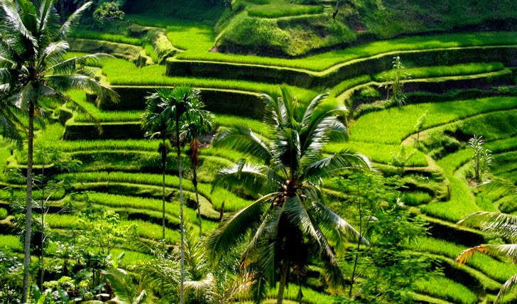 Ubud the best city in Asia, yoga in ubud, yoga class, ayung rafting, adventure in bali, Eat Pray Love, museum, honeymoon,