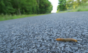 #2— If A Slug Crosses The Road
